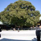 Tokyo: Meiji Shrine