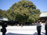 tokyo_meijishrine_yoyogipark_6